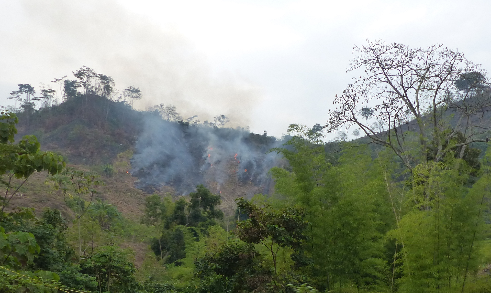 P2290783 deforestation y fires