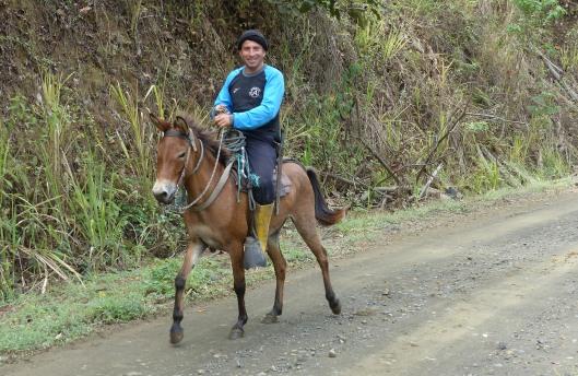 P2330851 little mule