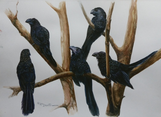 P2420896 smooth billed ani watercolor small file  13 x 16  paper 14 x 17.jpg