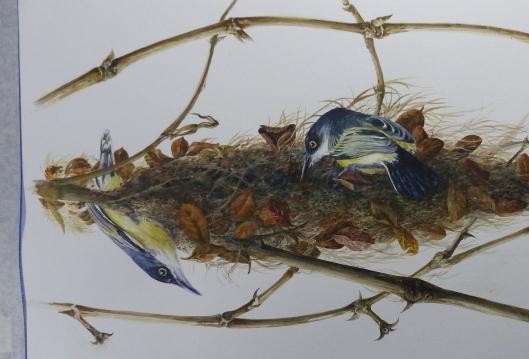z p2410366 watercolor common tody flycatcher