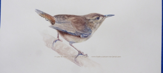 P2470796 watercolor in progress of house wren c lisa brunetti