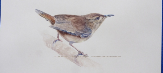 ww P2470796 watercolor in progress of house wren c lisa brunetti