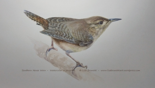 ww P2470901 HOUSE WREN watercolor y acrylic small file