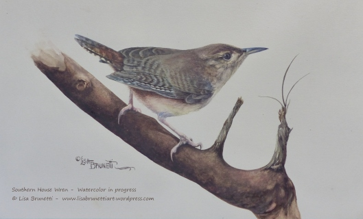ww2 P2480307 HOUSE WREN watercolor by Lisa Brunetti small file