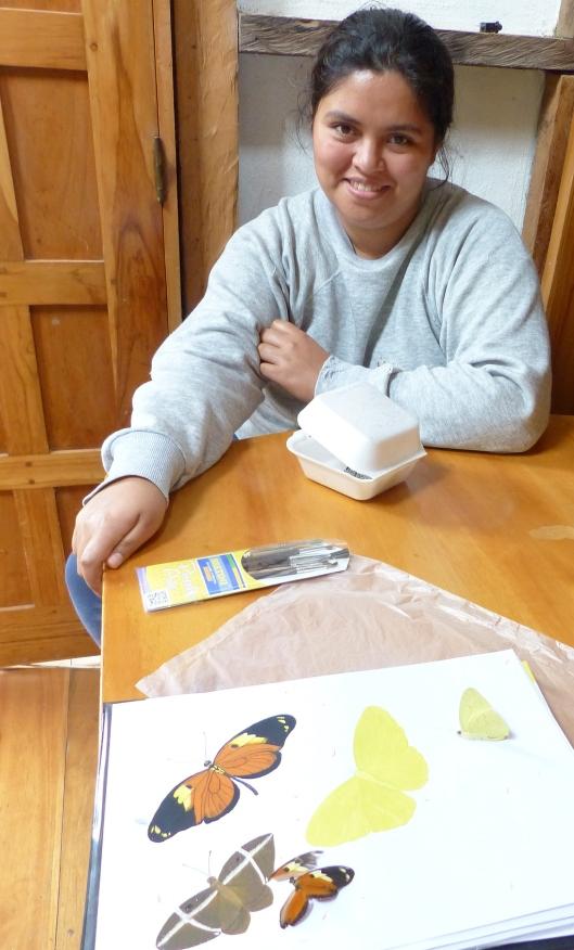 P2350144 melissas butterflies guache