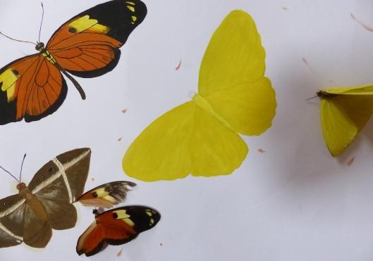 P2350146 melissas butterflies guache