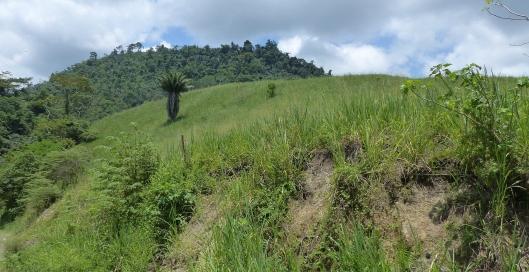 P2560471 green pastures no birds