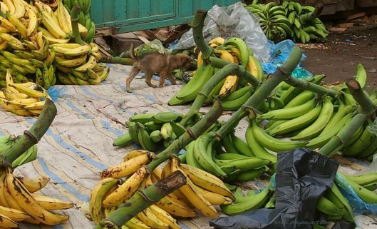 PB220431 cuenca saturday market PLANTAINS Y PUPPY.jpg