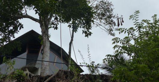 P2880880 oropendola nests