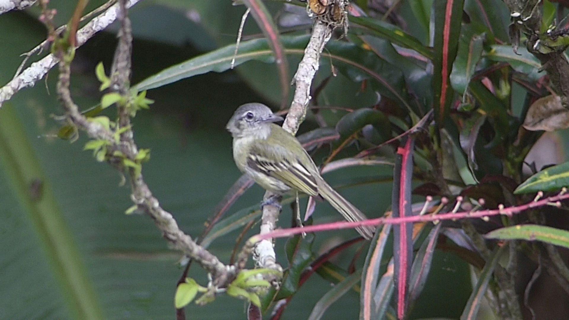 mystery bird P2440158 which bird