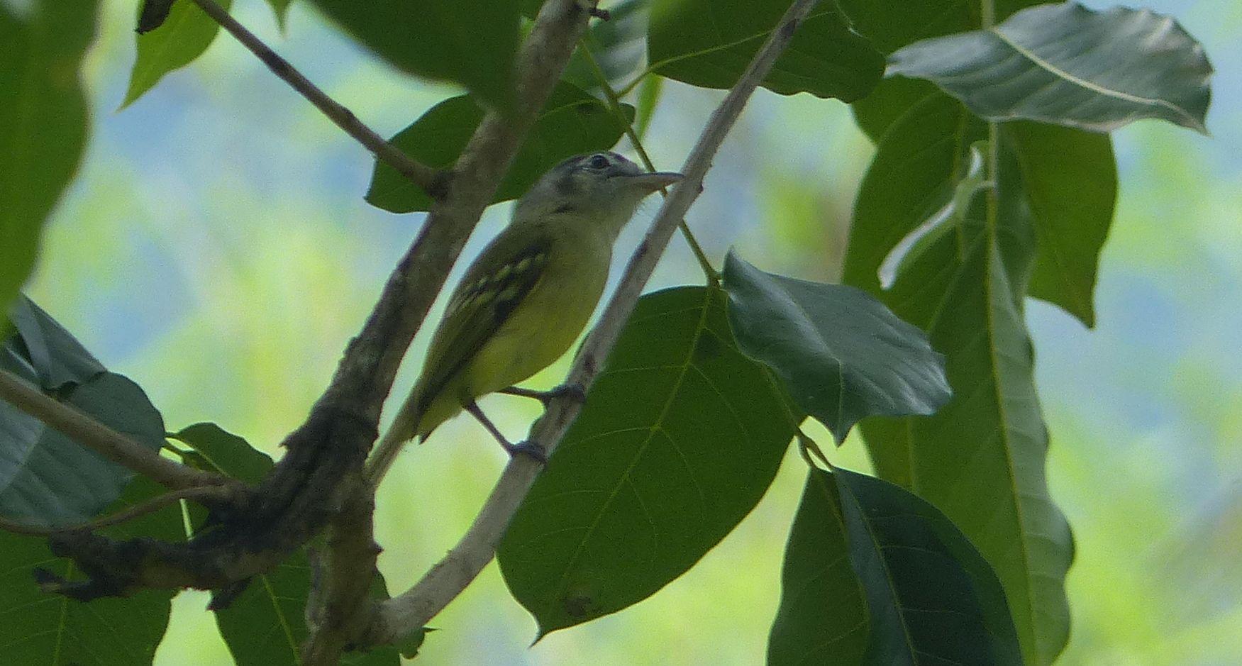 P2940648 MYSTERY BIRD