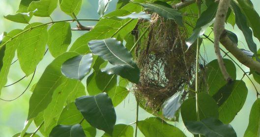 P2940656 MYSTERY BIRDS NEST