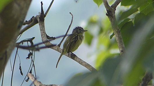 P2940708 MYSTERY BIRD