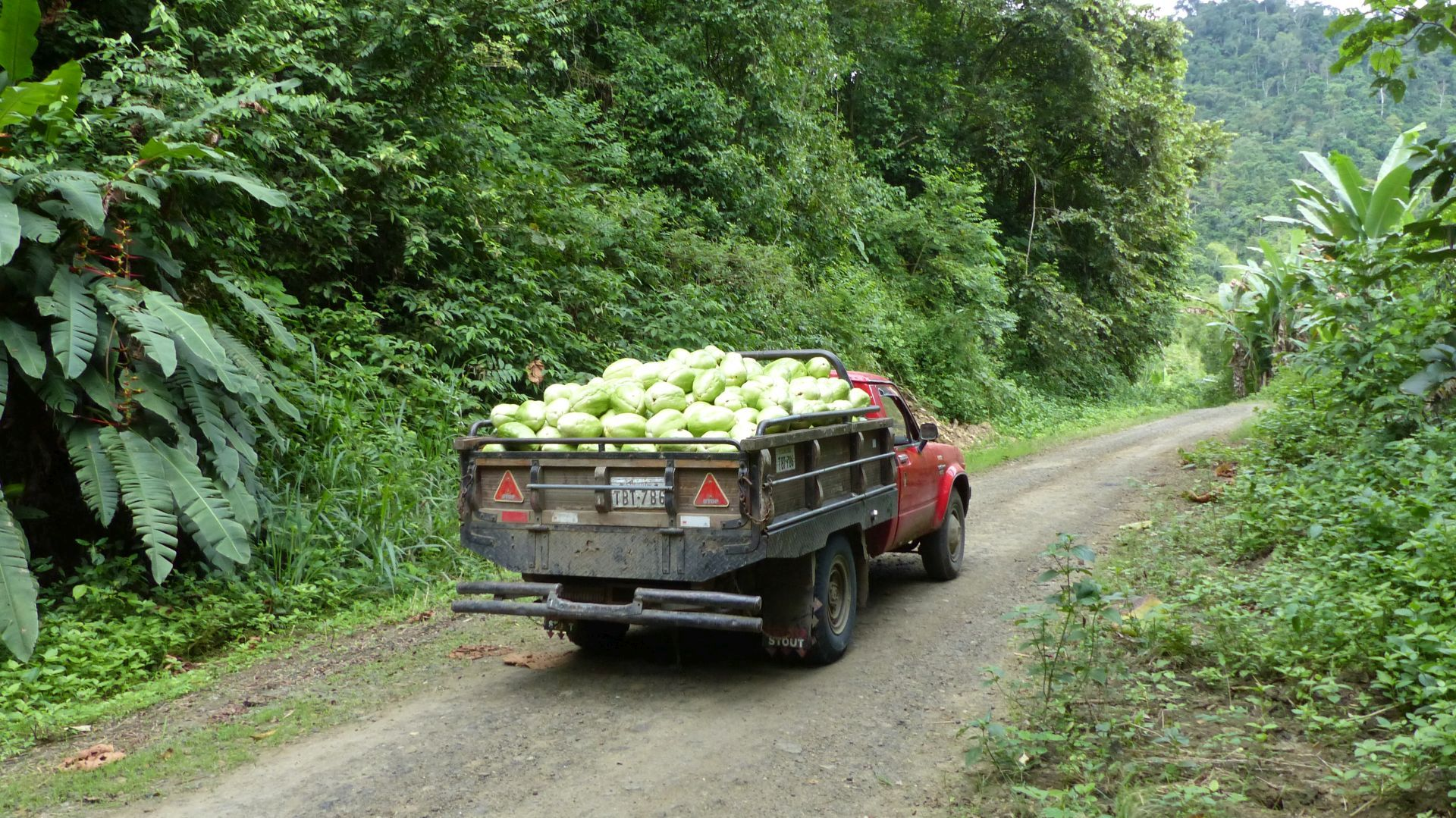 P2690627 truck load of fruit