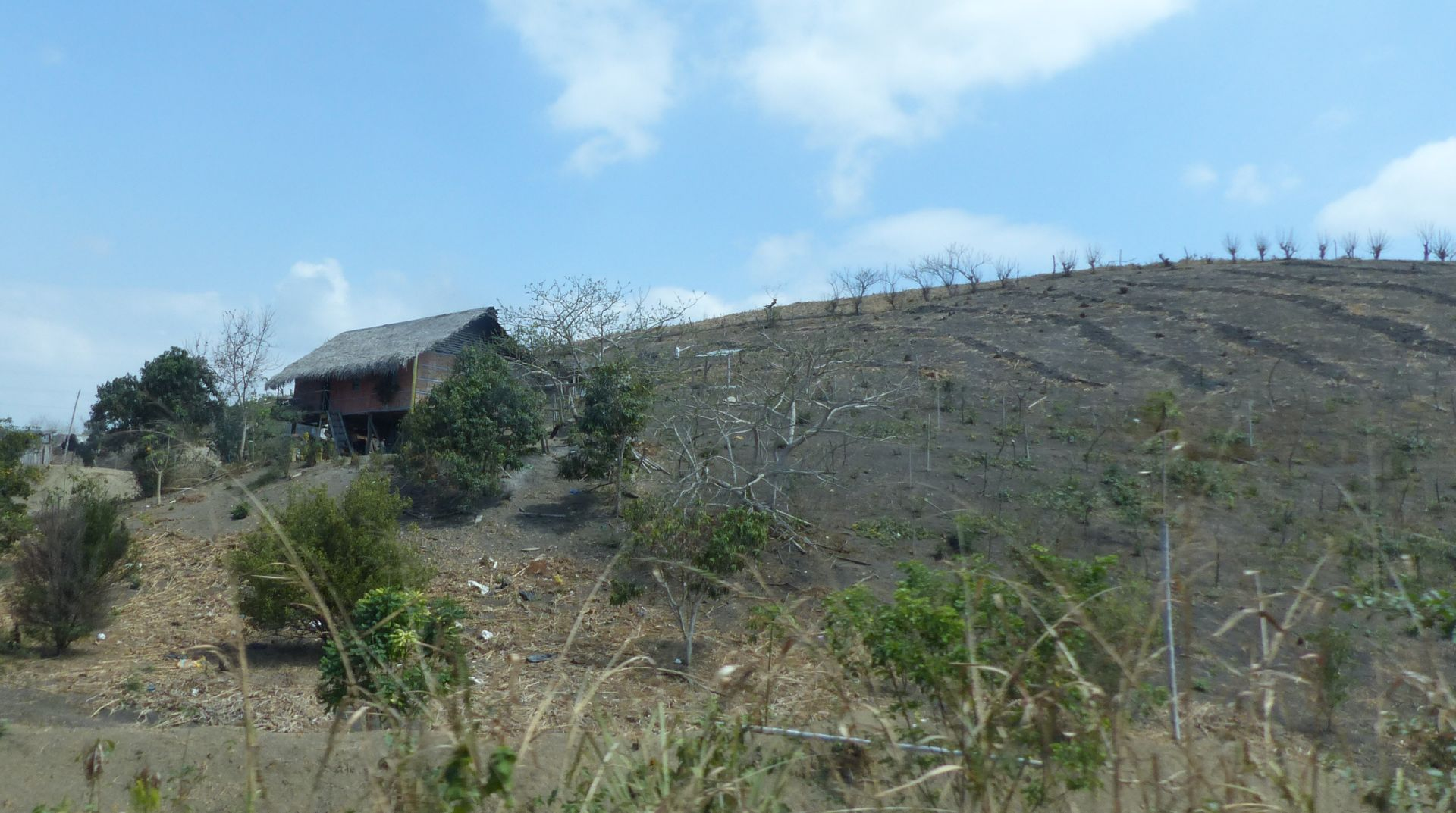P3160389 deforestation scalped landscape